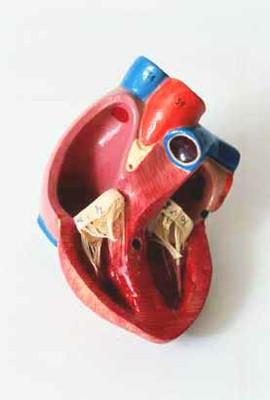 hart en vaten_0012.jpg