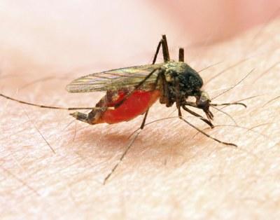 Combinatietherapie effectief bij malaria