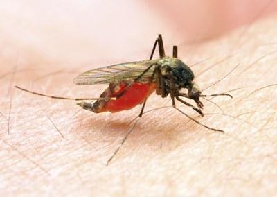 Vaccin tegen dengue