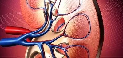 Behoud nierfunctie bij tolvaptan