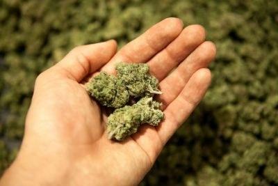 Cannabisgebruik stijgt, FTO-module beschikbaar