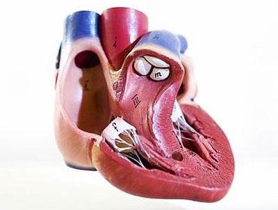 Gasbelletjes voor betere werking hartmedicatie