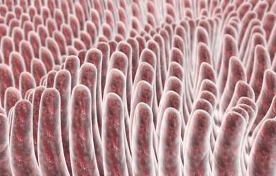 Invloed antibiotica op darmflora stuurt ICI's