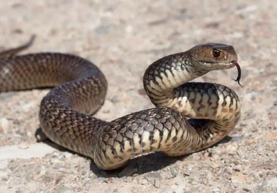 € 12,5 miljoen voor geneesmiddel uit slangengif