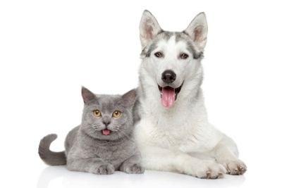 Diëthanolamine niet in diergeneesmiddelen