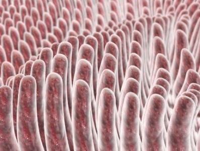 Verhogen van galzuurconcentratie in de darm verhelpt obstipatie