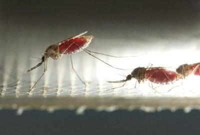 Europa: € 10 miljoen voor nieuw malariamiddel
