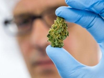 Type cannabis bepalend voor invloed op rijgedrag